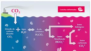 acidificacion-marina_1