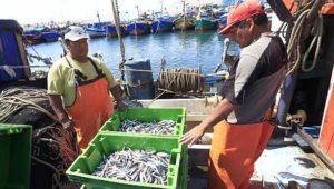 pesca-anchveta