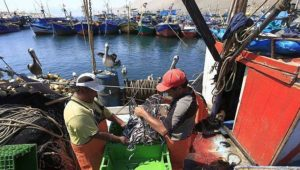 produce-pescaper