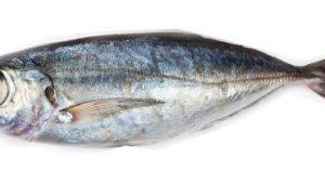 caballa-ojo-grande1