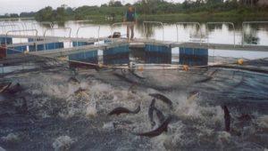 catastro-acuicola