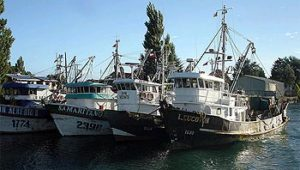 sardina-anchoveta
