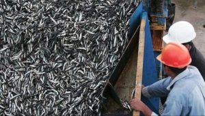pesca-anchoveta