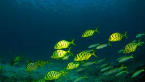 oceanos_ries