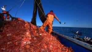 Industriales-pesqueros-langostino-amarillo-Industriales