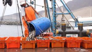 piura-la-anchoveta-en-peligro