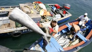 pesca-ilegal-provoca