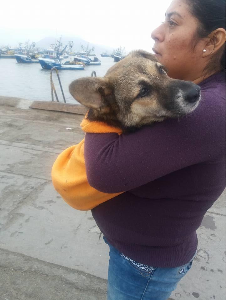 perrito salvado de los chinos
