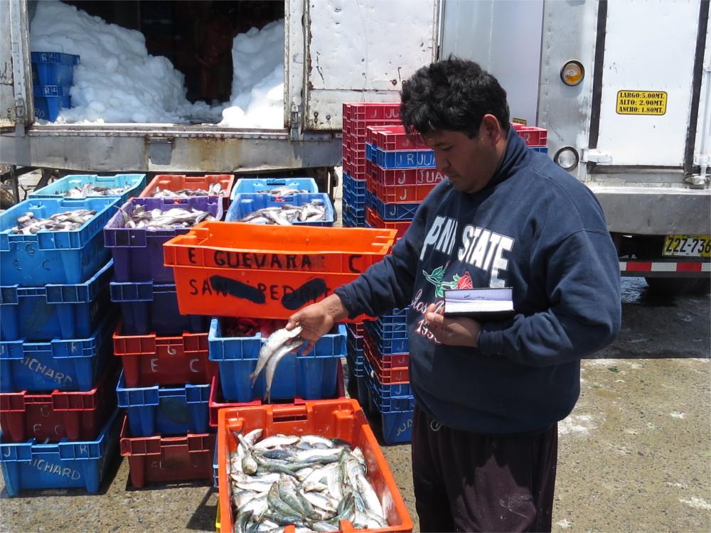 pesca-sardina1