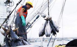 se inicio pesca de Atún
