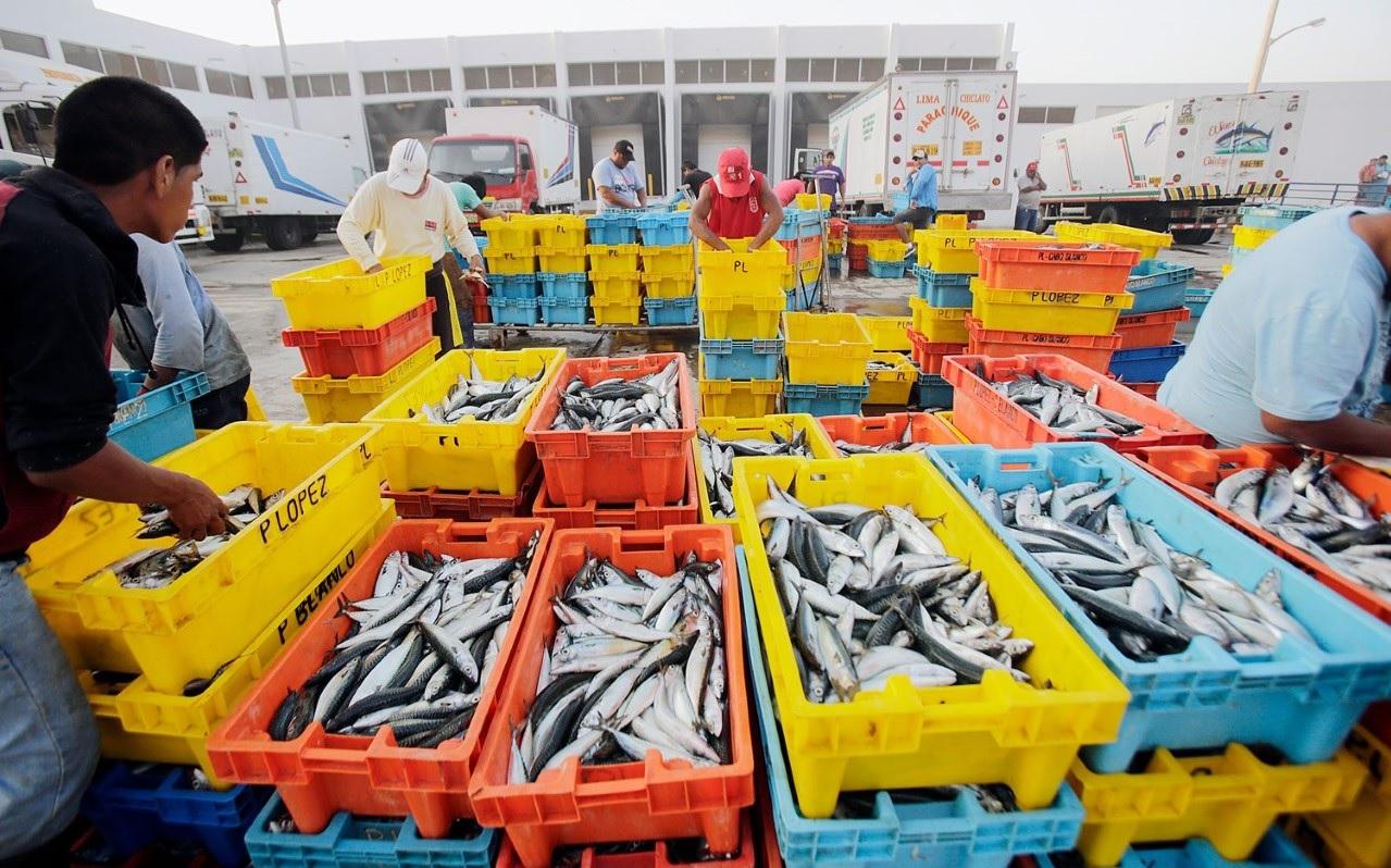 sector pesquero crecio