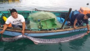 pez remo 3