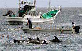 delfines en japon