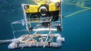 drones para transportar tiburones