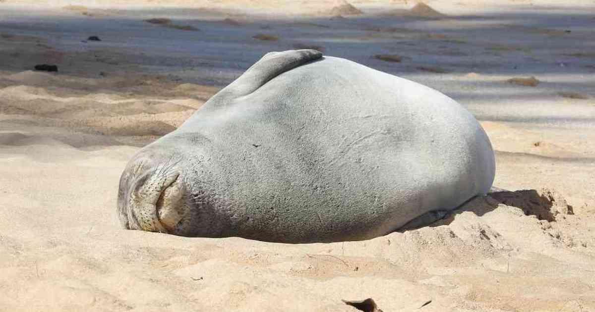 Muerte de focas
