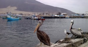 Vice-Presidente Provisional Visito El Muelle Artesanal