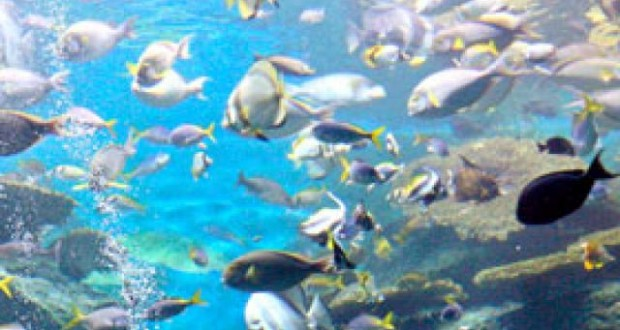 Especialista de ONG Asidh alerta que la contaminación alejará especies marinas