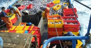 Cuota de Merluza debe ser 40 mil toneladas para 2013