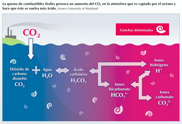 Destinan USD 11 millones para estudiar efectos de la acidificación marina