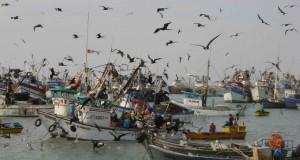 2.53 millones de toneladas de Anchoveta pescarán industriales harineros