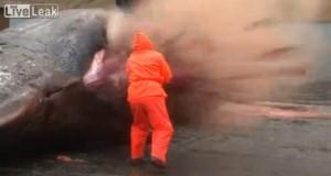 Ballena le explota en la cara a pescador en Islas Feroe