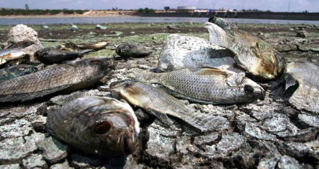 Un vertido de sosa cáustica deja peces muertos en Pontevedra – Galicia