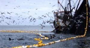 Pescadores artesanales ayer rechazaron oportunismo de Ministro