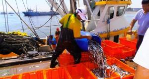 Decomisan más de 27 toneladas de recursos marinos en 6 regiones