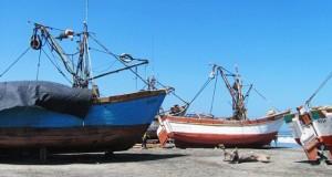 Caen las descargas pesqueras en mayo