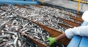 PRODUCE confirma que no habrá segunda temporada de Pesca de Anchoveta