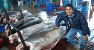 PUCUSANA atractivo turístico y cuna de aguerrida comunidad pesquera
