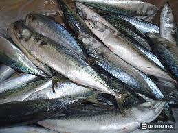 Decomisan más de 10 toneladas de especies marinas en la Región Lambayeque