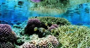 Obama crea la mayor reserva marina en el Pacífico