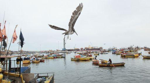 Rusia abre su mercado a 18 empresas pesqueras peruanas