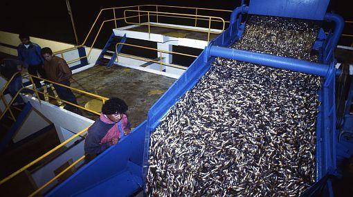 Según el INEI la actividad del Sector pesca se incrementó en 13.48% en julio