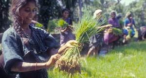 ROMA – Para erradicar el hambre se debe dar prioridad a los agricultores familiares