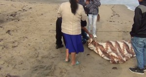 CHIMBOTE – Hallan cadáver de pescador desaparecido después de seis días