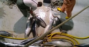 BRASIL – Confiscan carga de Atún por uso de arte prohibido