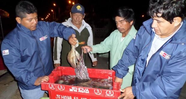 Inspectores de Produce incautan 100 kilos de Pulpo en veda en Piura