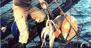 Buscan consolidar pesca artesanal y de menor escala de Pota