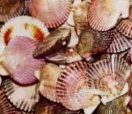 Más de 3,000 pescadores artesanales de conchas de abanico se beneficiarán con capacitación de PRODUCE