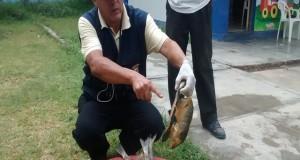 CHICLAYO – Incinerarán Pescado con gusanos que fue decomisado