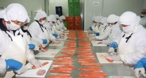 Piscis Perú prevé iniciar exportaciones de Trucha al mercado asiático en el 2016