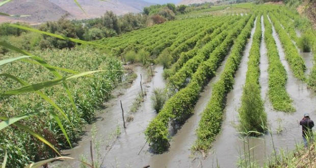 """ANCASH  – La Pesca y la Agricultura sufrirán por """"El Niño"""""""