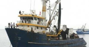 IMARPE realizará pesca exploratoria de Anchoveta