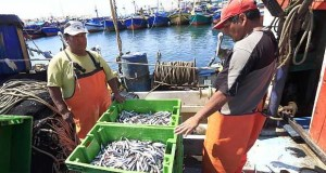 Temporada de pesca de Anchoveta se iniciará el 26 de marzo