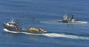 Pesca crecería 17% en el 2015 por mayor actividad durante el segundo semestre, prevé Interbank