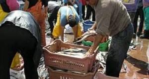 CHILE – Considerable caída registran los desembarques pesqueros