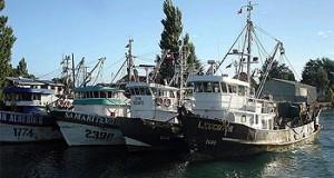 CHILE – Cierran todas las áreas de captura de Sardina y Anchoveta en Bío Bío