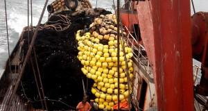 ¡Manejo de la pesquería de la Anchoveta en el Perú!